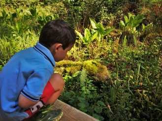 LittleMan and Pitcher Plants at Bloedel Reserve Bainbridge Island 1