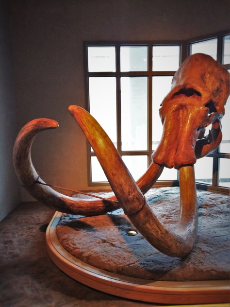 Mastodon Skull and Tusks in Prehistoric Journey in Denver Museum of Science and Nature 1