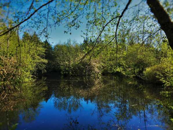 Still Pond with Reflections at Bloedel Reserve Bainbridge Island 3