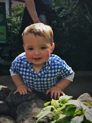 TinyMan Looking at Butterflies at the Butterfly Pavilion Denver Colorado 2