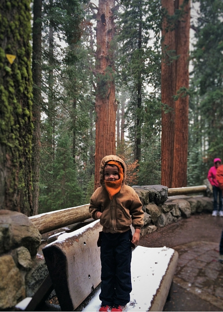 LittleMan and Giant Sequoias at General Sherman tree in Sequoia National Park 2traveldads.com