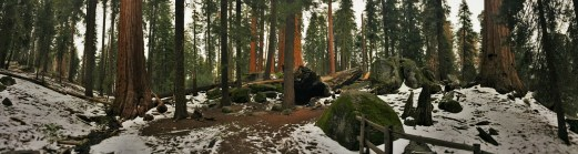 Off the main trail at Grant Grove Kings Canyon National Park 2traveldads