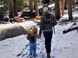 Rob Taylor and Dude in Sequoia National Park with Kids 2traveldads.com