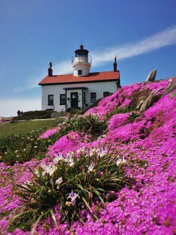 Flowers at Battery Point Lighthouse Crescent City 4
