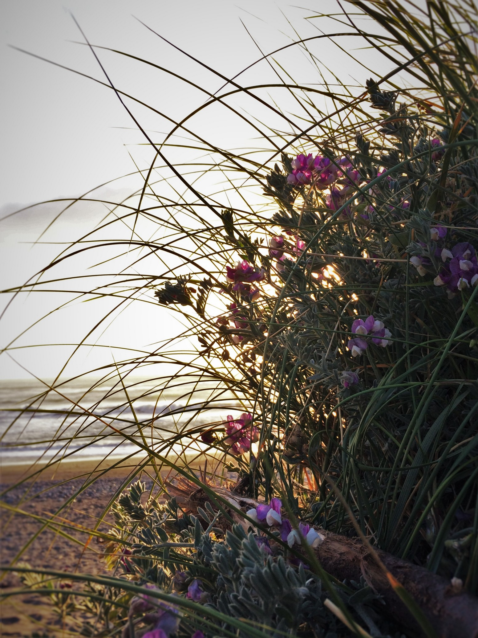 Flowers at Beach at Pacific Reef Hotel Gold Beach Southern Oregon Coast 1