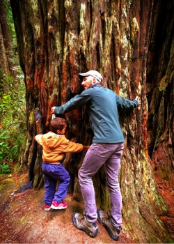 Rob Taylor and LittleMan in Redwood National Park California 2traveldads.com