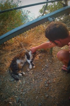 Cat on hiking trail of Cinque Terre Italy 1e