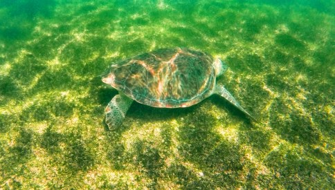 Swimming with Sea Turtles in Akumal 2