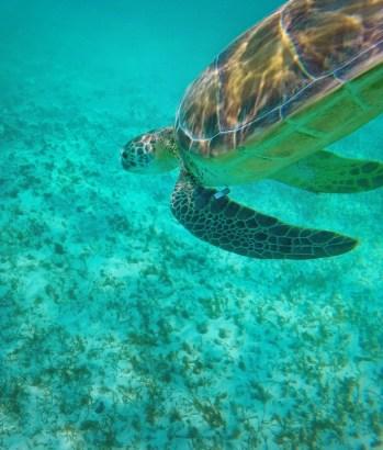 Swimming with Sea Turtles in Akumal 6