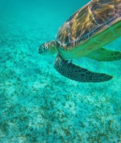 Swimming with Sea Turtles in Akumal 6