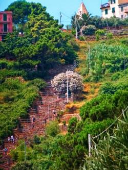 Staircase at Corniglia Cinque Terre Italy 1e