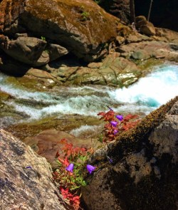 Clear water and colorful rocks and flowers at Silver Falls Mt Rainier National Park 1