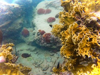 Reef while snorkeling in Labadee Haiti 1