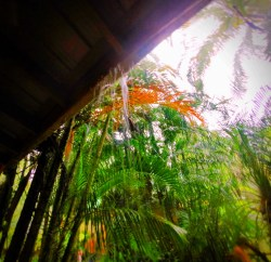 Monsoon rain at Chukka Tour House Ocho Rios Jamaica 1