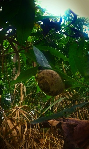 Snail on Tropical Plants and Monsoon rain at White River Ocho Rios Jamaica 1