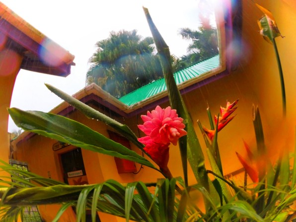 Flowering Ginger and Monsoon rain at Chukka Tour House Ocho Rios Jamaica 1