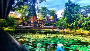 Lily pond in Balindonesia ADare Photography