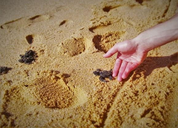 baby-turtles-cabo-mexico-1