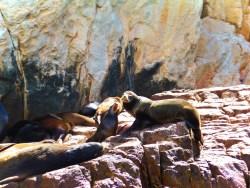 Sealion colony at El Acro Cabo San Lucas