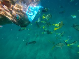Rob Taylor snorkeling in Cabo San Lucas 8