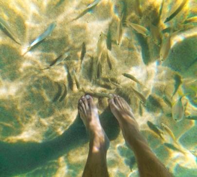 Fish nibbling toes while snorkeling