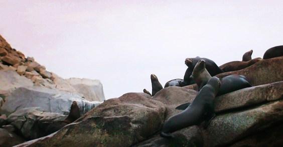 Sealion Colony at Cabo Pulmo National Park
