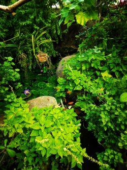 Butterfly Garden in Atrium at Tennessee Aquarium 2