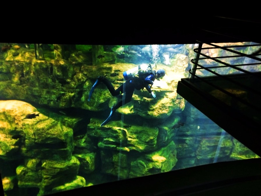 Diver in River tank at Tennessee Aquarium 1