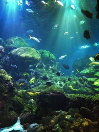 Large Ocean Journey Tank Tennessee Aquarium 1