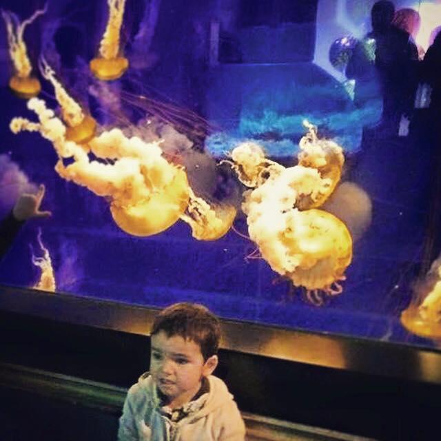 LittleMan Tennessee Aquarium Jellyfish