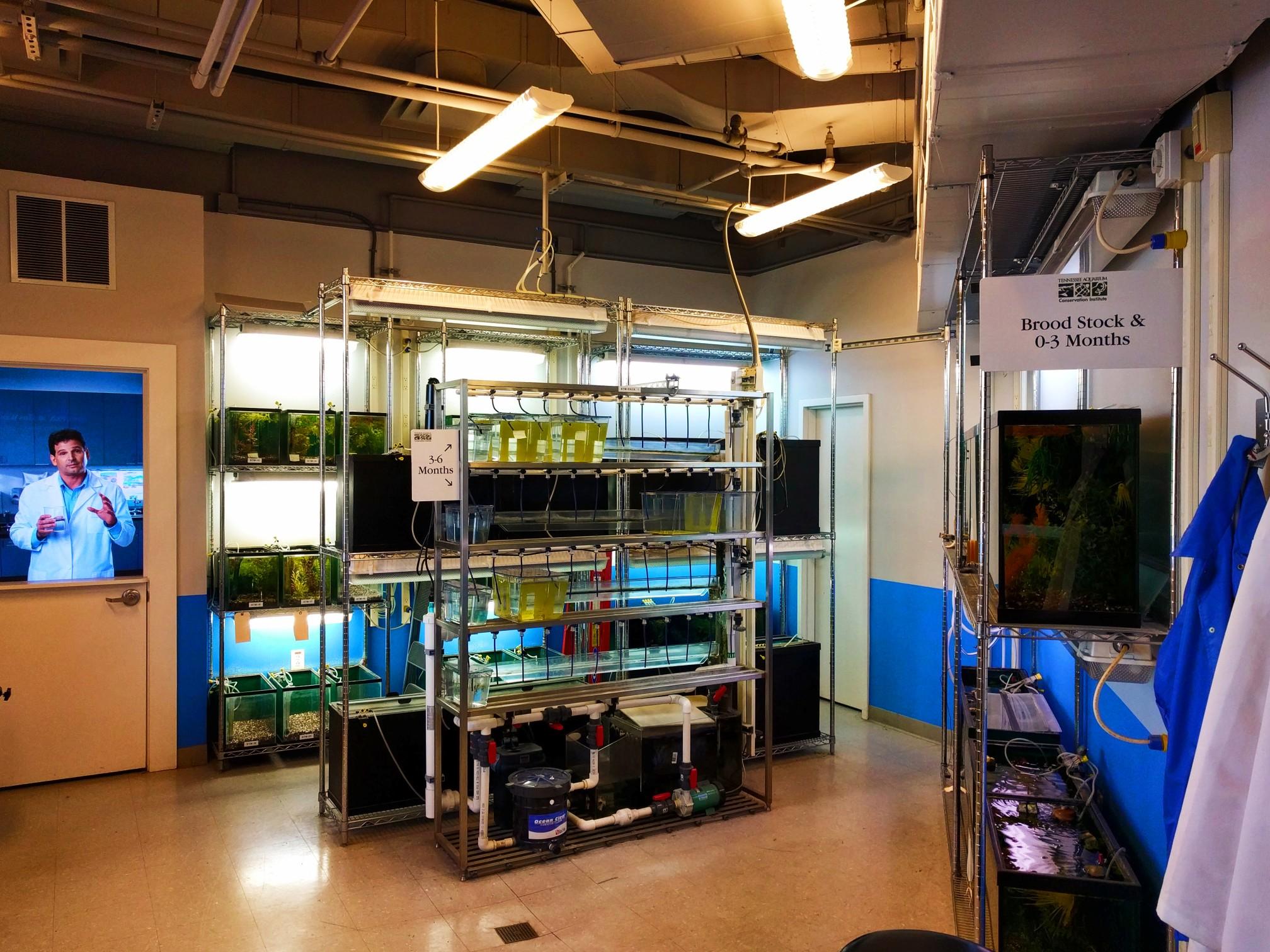 Species rehabilitation lab at Tennessee Aquarium 1