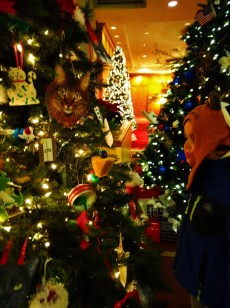 Taylor Family at Atlanta Festival of Trees 1