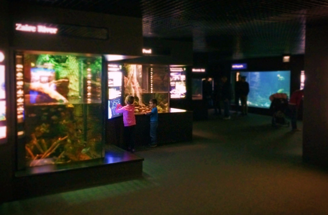Taylor Kids at Rivers of the World exhibit Tennessee Aquarium 1