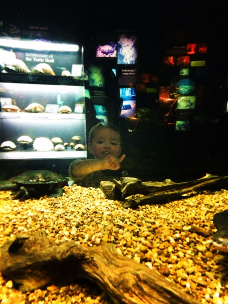 Taylor Kids at Rivers of the World turtle exhibit Tennessee Aquarium 2