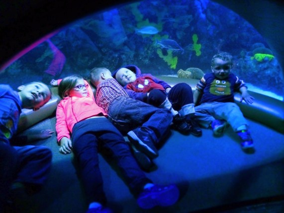 Taylor Kids at Secret Reef Tank Ocean Journey Tennessee Aquarium 3