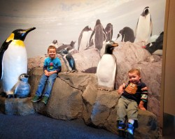 Taylor Kids with Penguins at Tennessee Aquarium 1