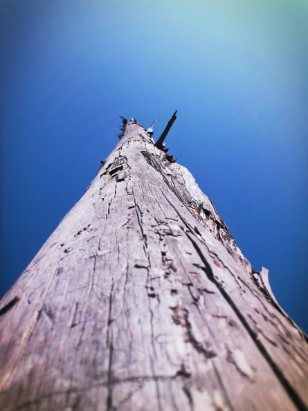 Driftwood at Dungeness National Wildlife Refuge Sequim WA 1
