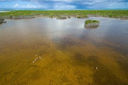 Flamingos in Northwest Point Pond Preserve Turks and Caicos VisitTCI