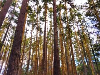 Forest at Dungeness Spit National Wildlife Refuge Sequim 1