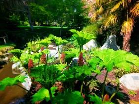 Gunera in Victorian Garden Chetzamoka Park Port Townsend 1