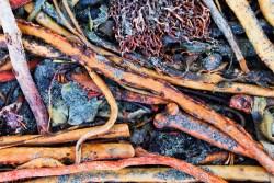 Kelp and driftwood at Dungeness Spit National Wildlife Refuge Sequim 1