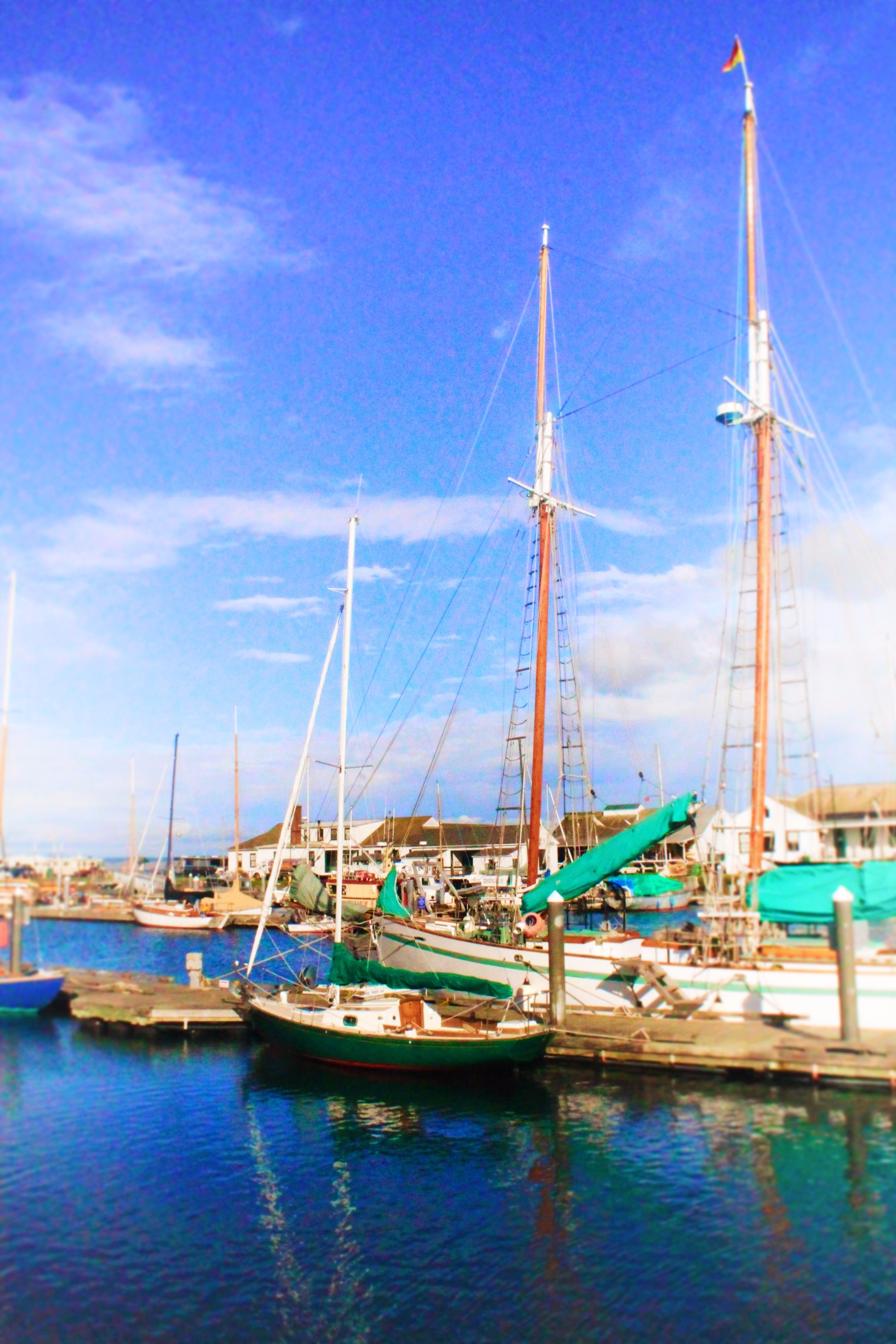 Sailboats in Hudson Point Marina Port Townsend 1
