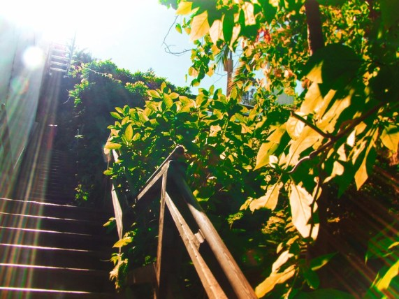 Greenwich Stairs on Telegraph HIll San Francisco 1