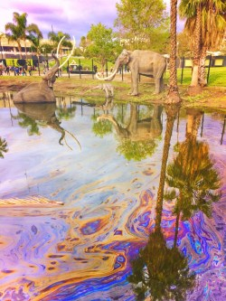 LaBrea Tarpits Sculptures in Large Pond Los Angeles 1