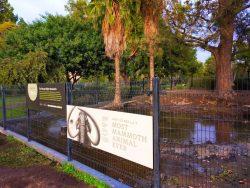 Mammoth Pit at LaBrea Tar Pits Los Angeles 1