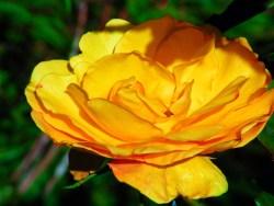 Rose Garden Telegraph Hill San Francisco 1