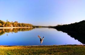 Blue Heron at Fort De Soto Park Campground Pinellas County Florida 1