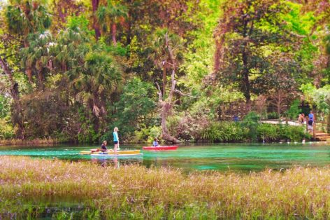 Canoeing and SUP at Rainbow Springs Florida State Park 3