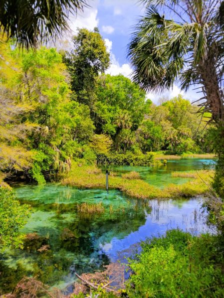 Crystal Clear water at Rainbow Springs State Park 3