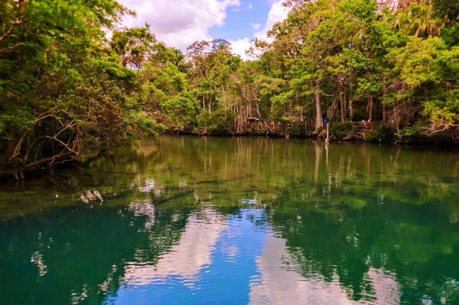 Headwater springs at Homosassa Springs State Park Florida 1